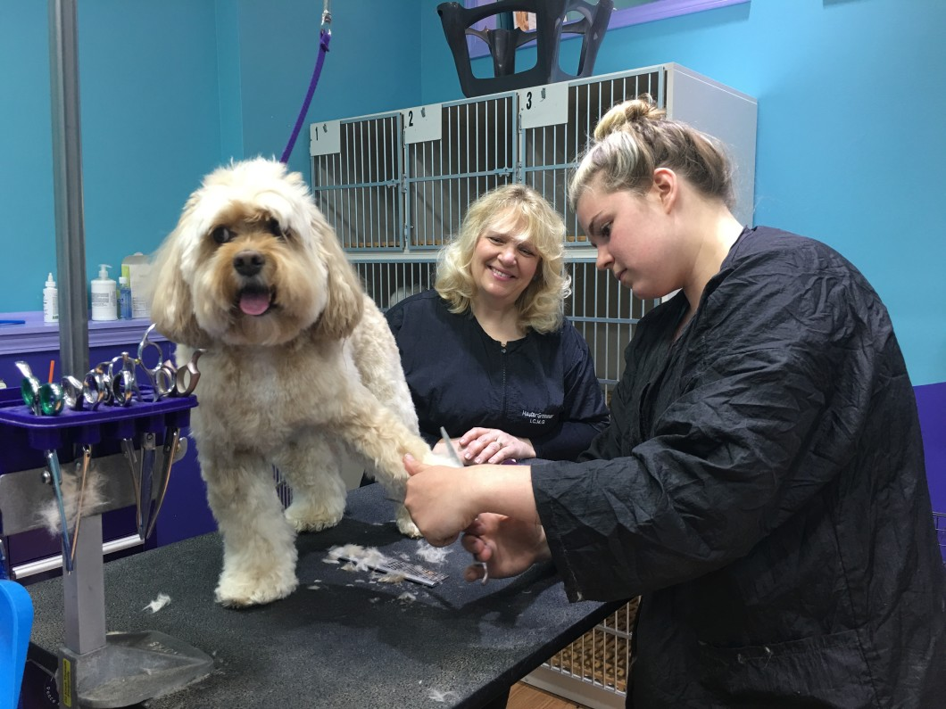 Low Cost Weekly Coat Maintenance At Love Fur Dogs